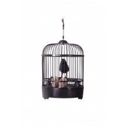 Pták v kleci