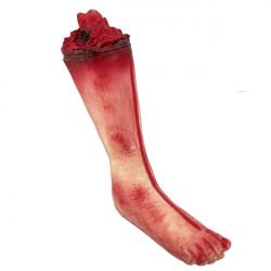 Utržená noha